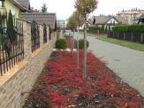 Ogród w Jaworznie (jesień)